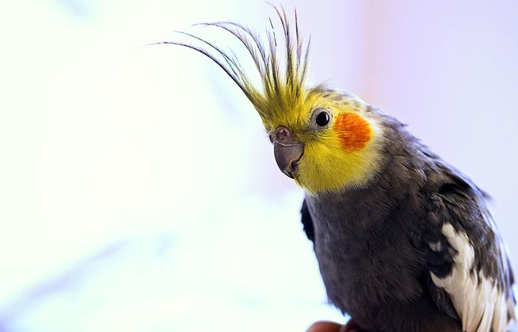 Попугай выдал все интимные тайны хозяев и разрушил нашу дружбу