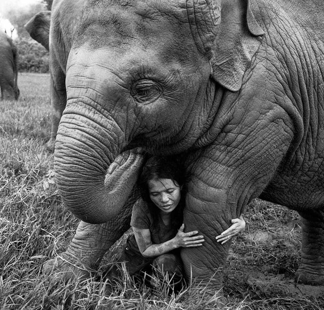 35 лучших фото от National Geographic за всю историю бренда
