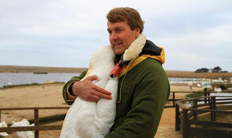 Лебедь очень трогательно обнял мужчину, который его спас