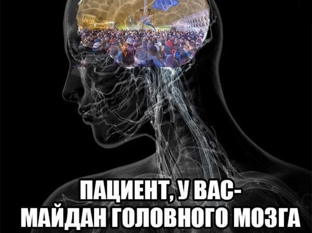 бесплатный шаблон мозгов нету фото результате