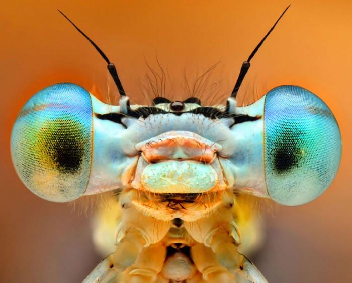 Глаза жуков: макрофотографии насекомых от Иренеуша Ирасс Валеджик