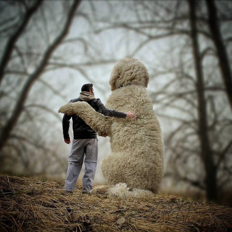 22 забавных фотографии о невероятных приключениях фотографа и его «гигантской» собаки... животные,жизненное,жизнь,звери,курьезы,мир,питомцы,приколы,смешное,собаки,факты,щенки,юмор