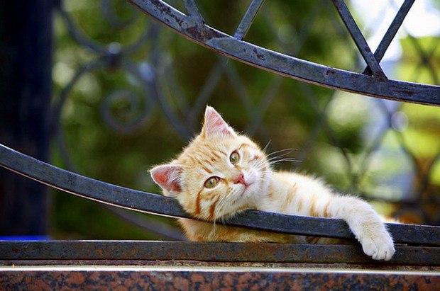 Позитивные и милые фотографии про животных