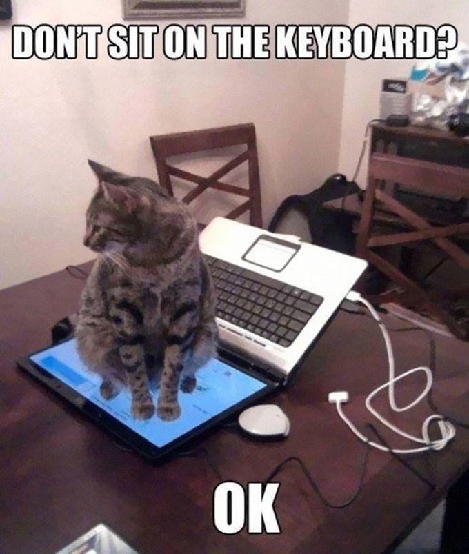8. «Не сидеть на клавиатуре? Да пожалуйста!» животные, кошка, логика