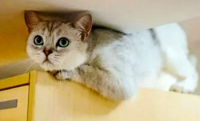 Кошка на 40 дней осталась в квартире одна, хозяева вернулись и обнаружили дома уже пять кошек