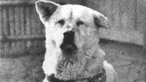 Человек и собака. Истории самой бескорыстной дружбы животные, истории, истории о животных, преданность, хатико