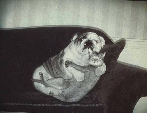 Друзья человека: фото, которые обязательно поднимут настроение! животные