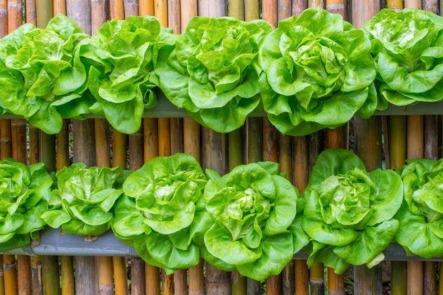 Огород: грядка на вертикали