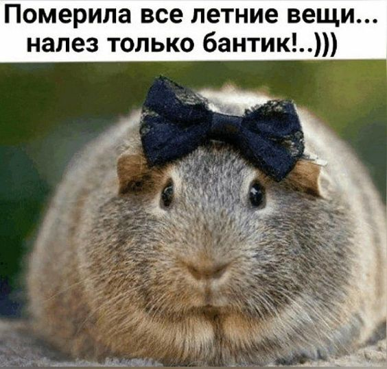 Hа показательных выступлениях победила гимнастка Маша Клюковкина...