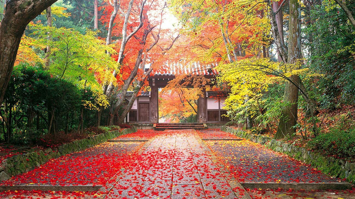 Japan_autumn_1 (800x493, 512Kb)
