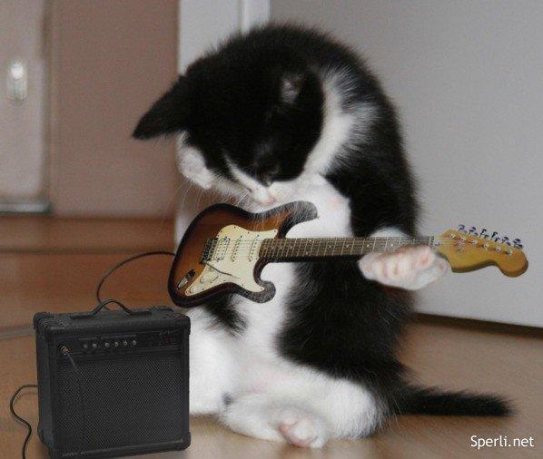 Кошачий концерт встречает эт…