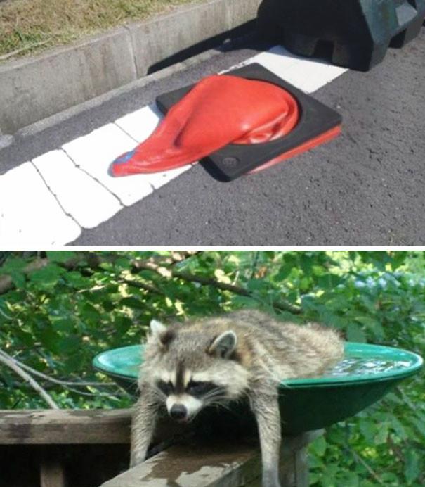 Уф, жара! животные, расслабленность, смешно, фото
