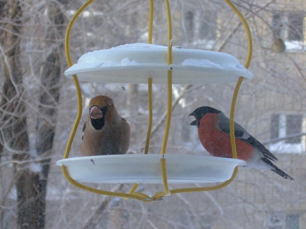 своими птиц кормушка для руками зиму на