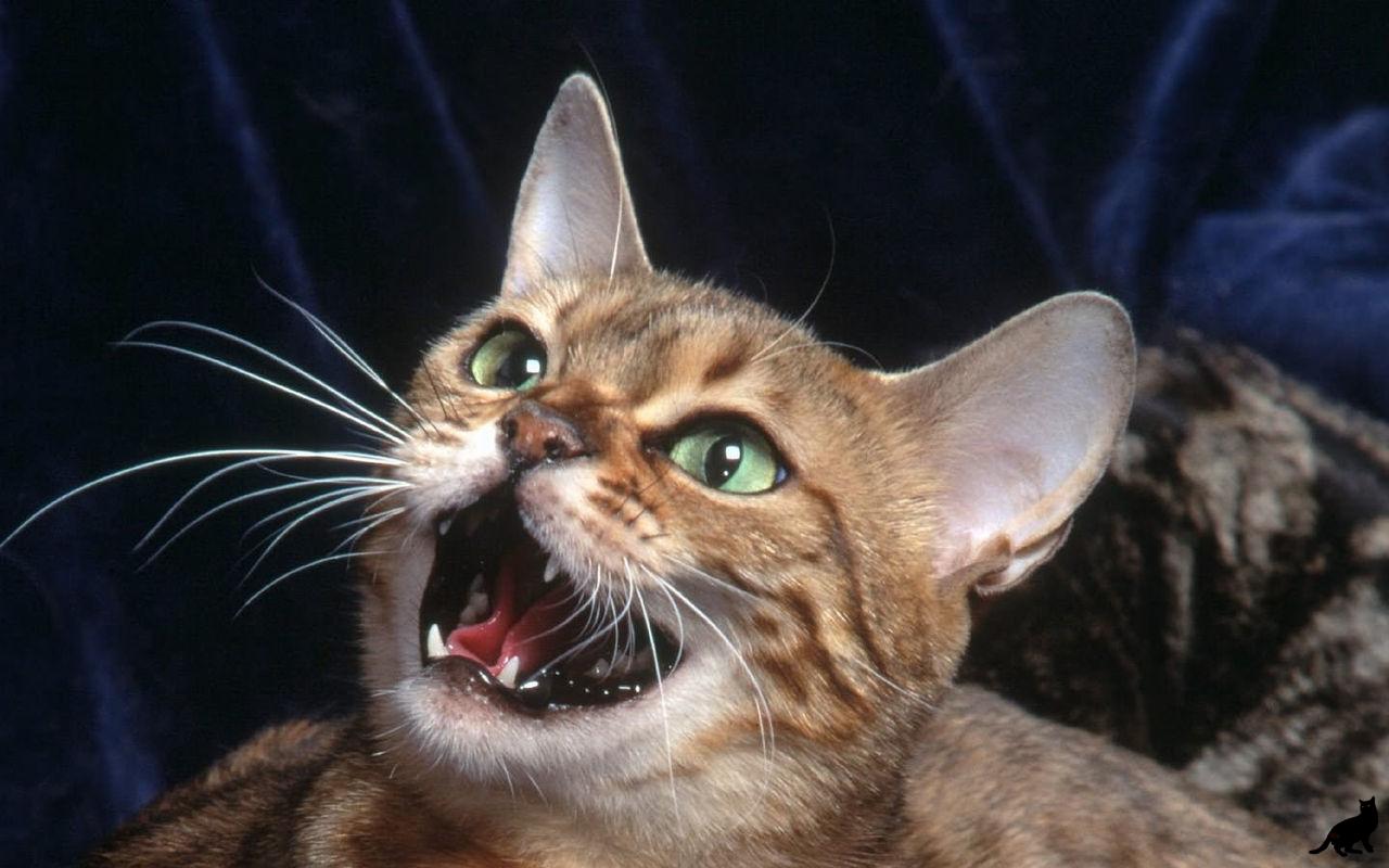 Это как надо достать кота, чтобы он так пел?