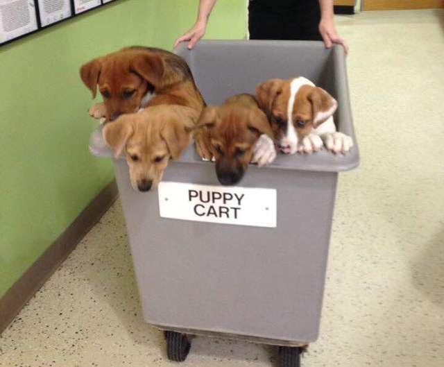щенки в контейнере