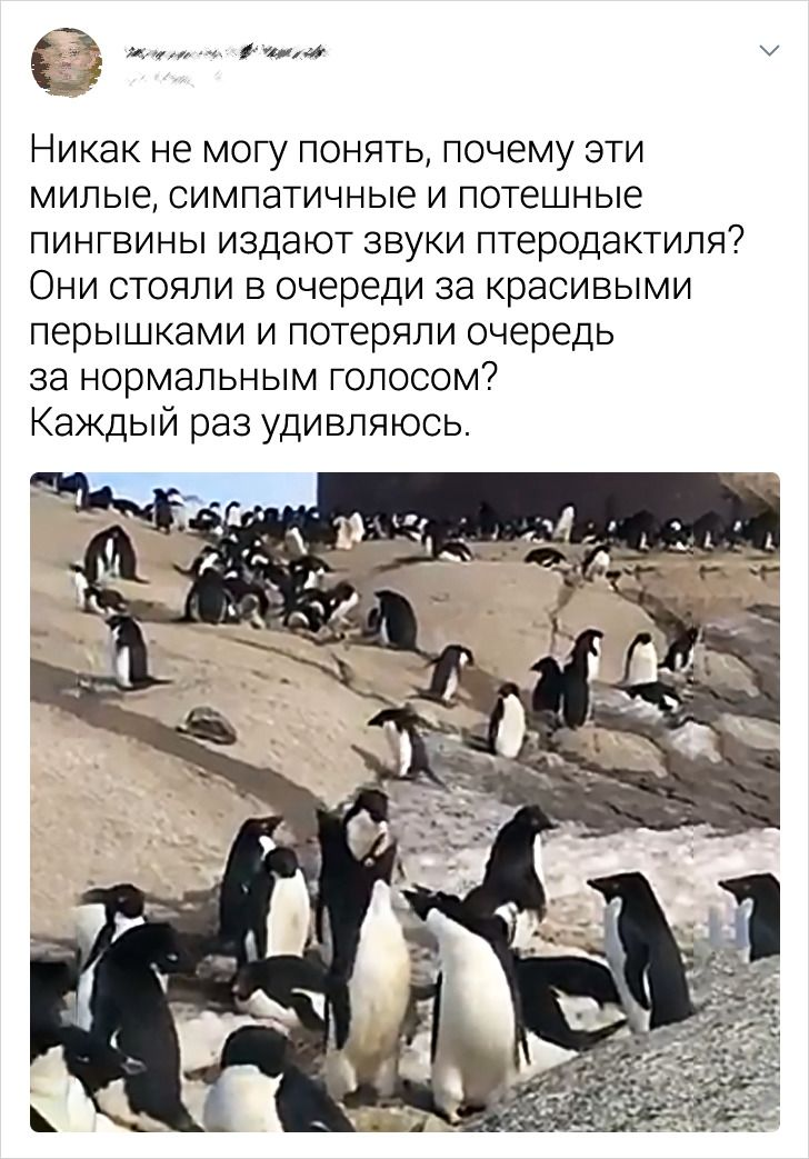 Вот такое оно, антарктическое лето Антарктида,из первых уст,пингвины