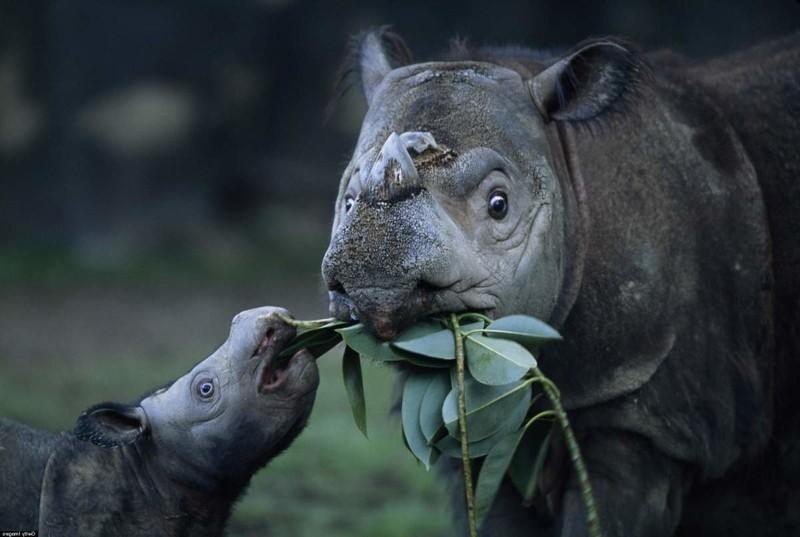 Животные планеты земля картинки фотографии сумрачным