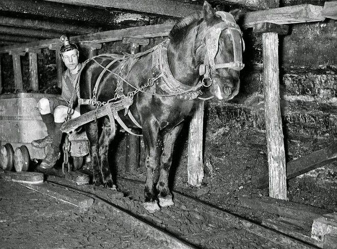 chevaux dans les mines