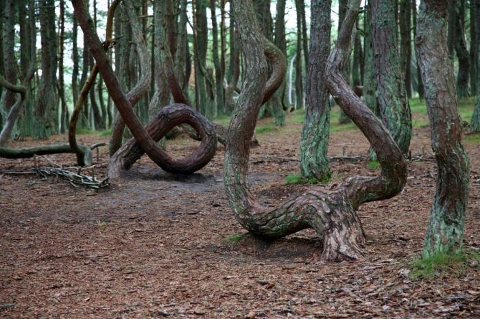 Какую тайну хранит Танцующий Лес?/Фото:theecology.ru