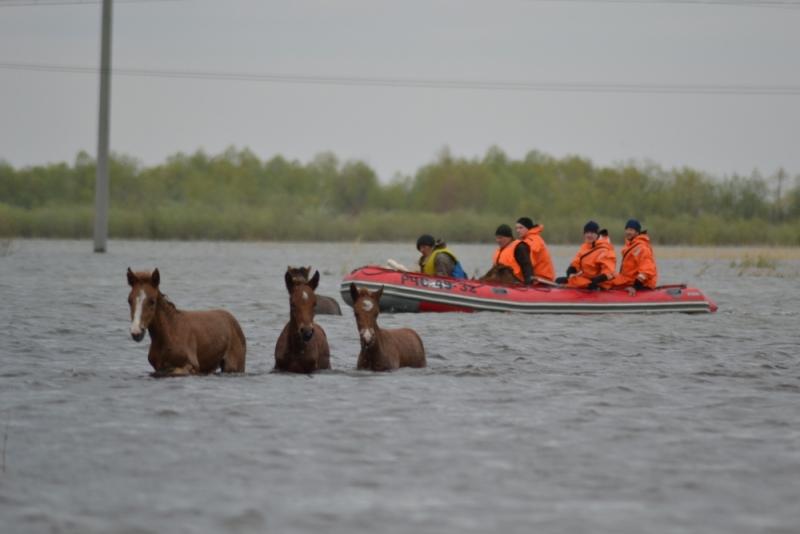 Спасение табуна лошадей в Тюменской области