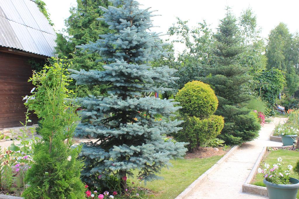Сад Галины Дядькиной