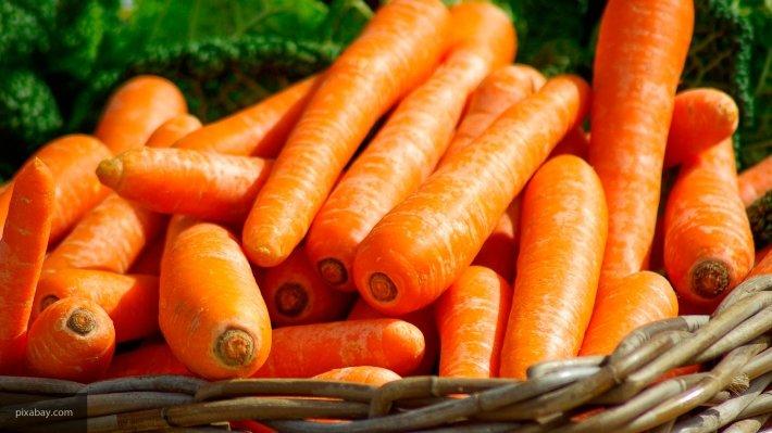 Новый цемент из моркови