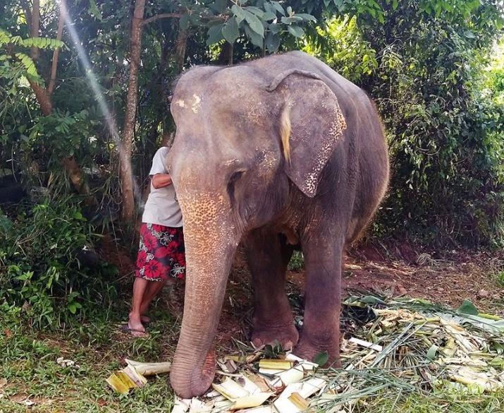 Слониха была в депрессии и не хотела жить, пока не встретила нового друга