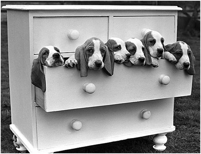 Талантливо... Подборка работ британского фотографа Артура Стилла фотография