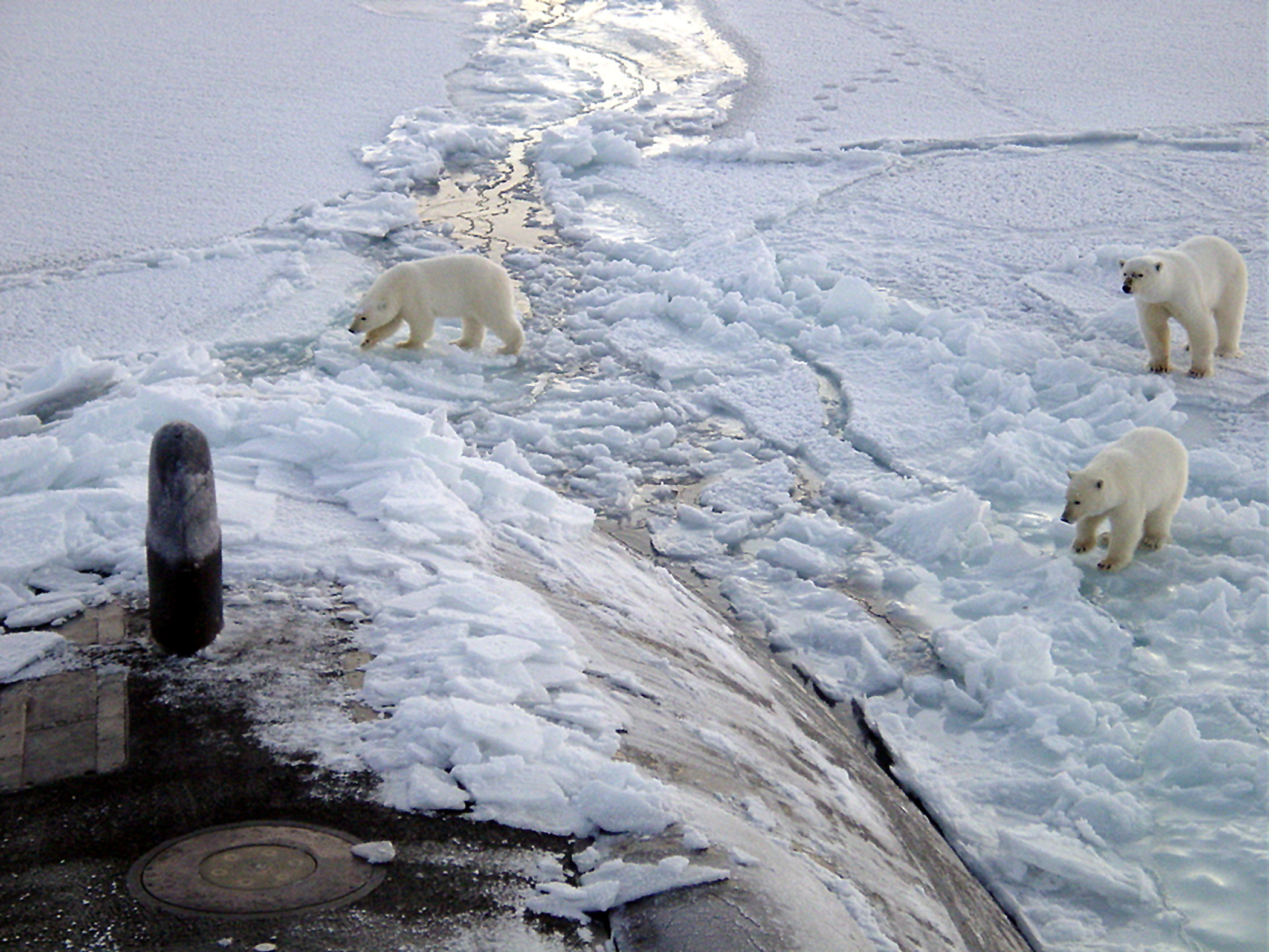 Polar_bears_near_north_pole.jpg