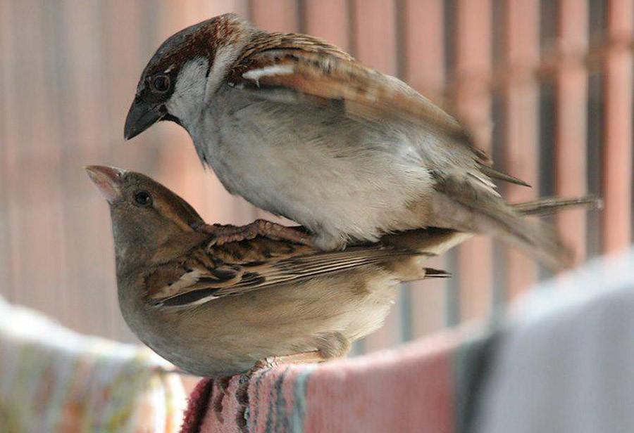 Птици занимаются сексом