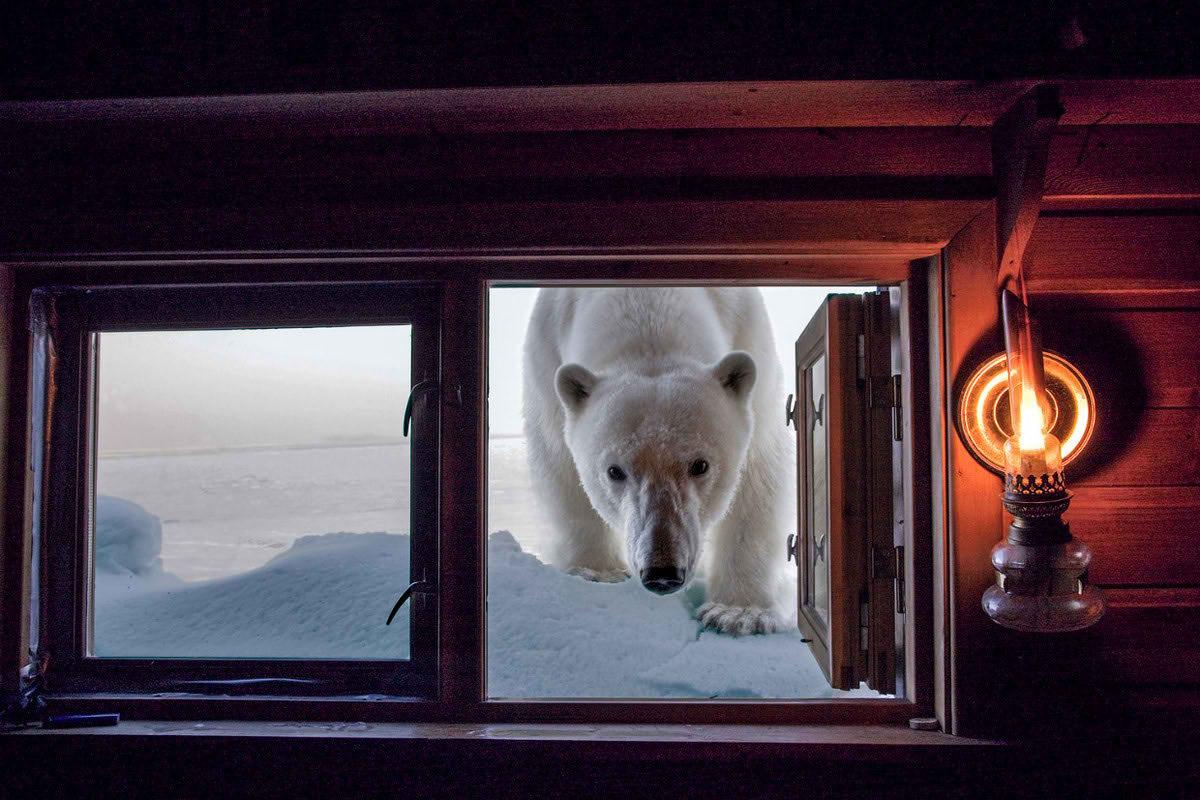 Сказочные снимки полярных животных