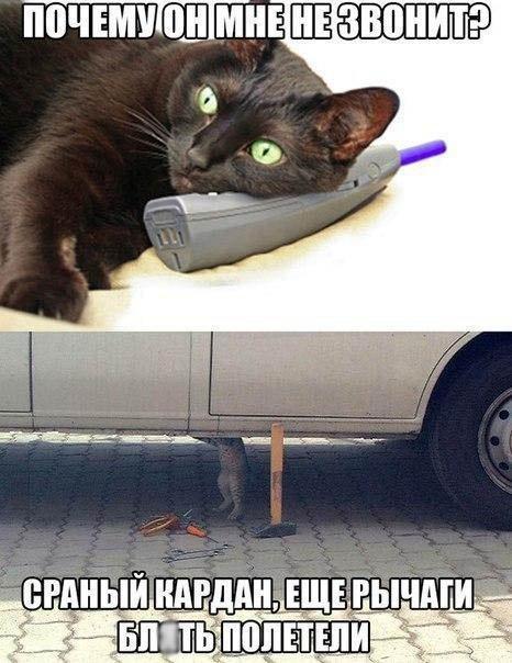 Кот - автомеханик