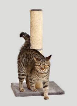 КОШКИН ДОМ. Как приучить кошку к когтеточке?