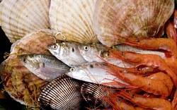 Употребление рыбы защитит от развития астмы