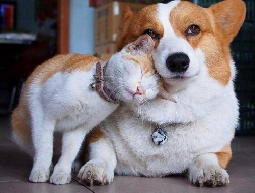 Эмоциональные животные