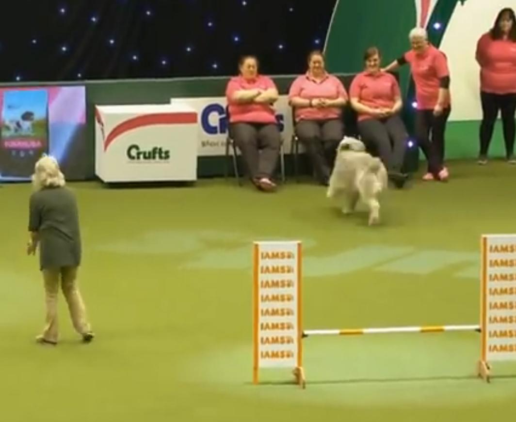 Вот, что может произойти, если на выставку собак придет спасенный беспородный пес!