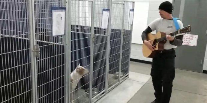 """""""Это случилось в одну из беспокойных ночей…"""" Брошенные псы выли, тоскуя по людям, пока не пришёл человек с гитарой"""