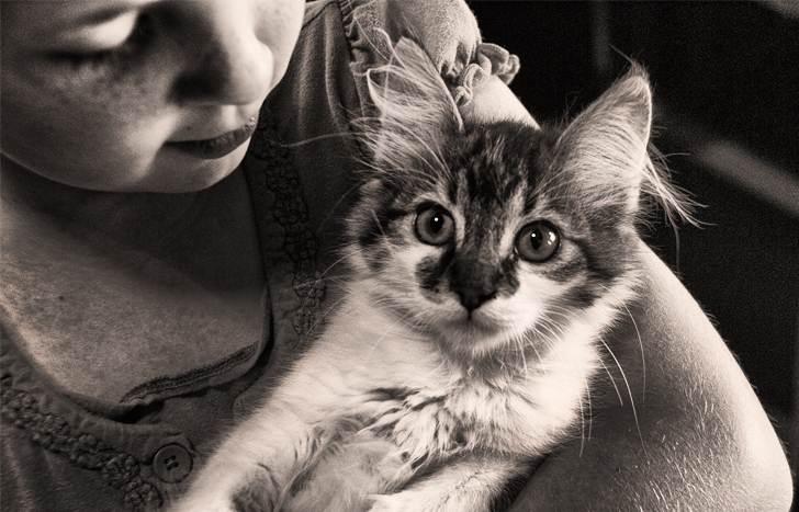Нашли котенка и всем миром собирали ему на домик