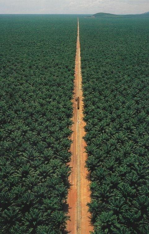 И навевает на мысли о том, что впереди еще много дорог дороги, какой большой мир, красота, умиротворение, фотомир