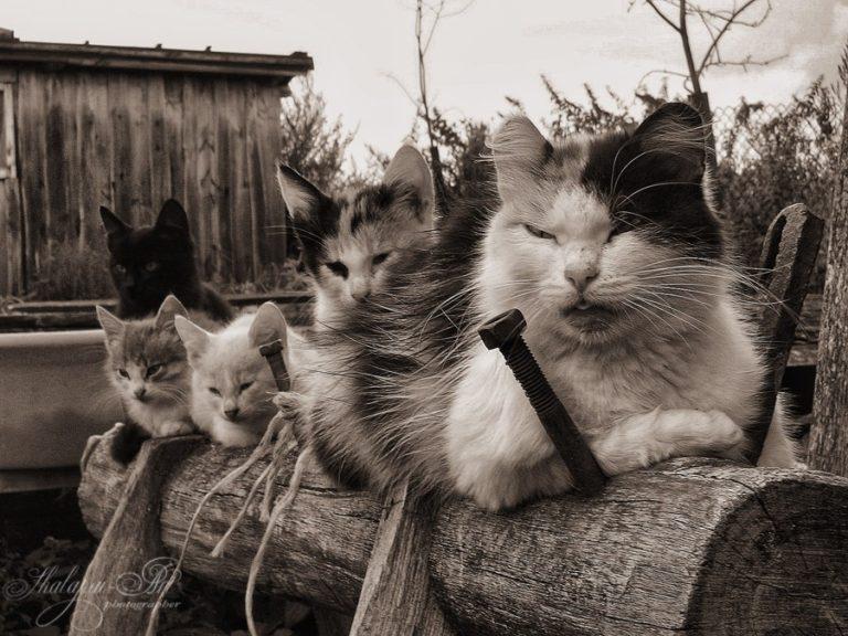 Смешная картинка банда