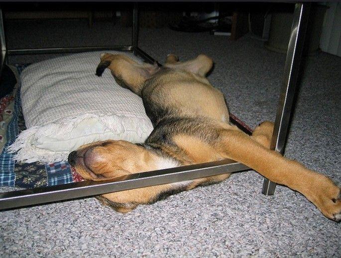 смешные спящие щенки, щенята заснувшие в неожиданных местах. щенки спящие в смешных позах