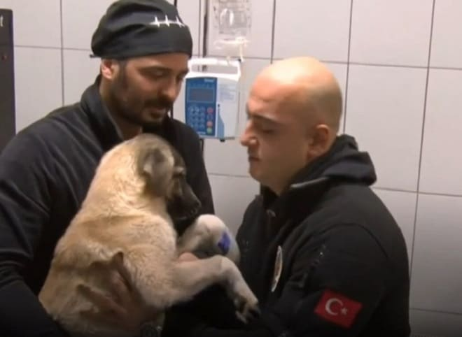 Собаку держит мужчина