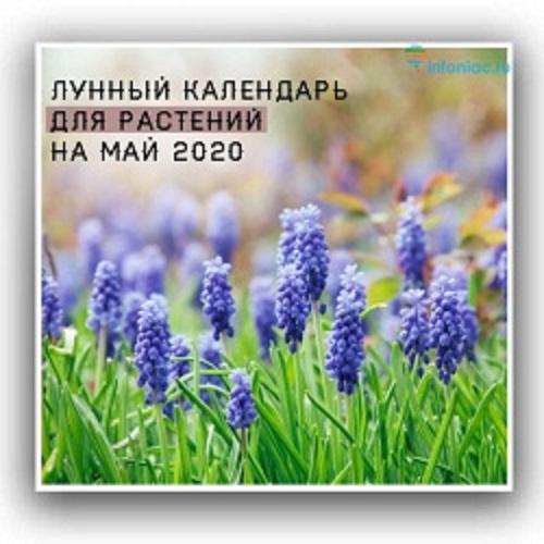 Лунный календарь для растений на май 2020 год.