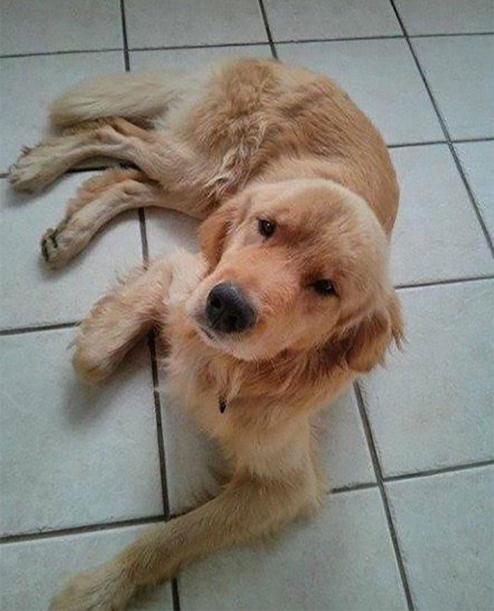 Он увидел пса на улице во время наводнения и пообещал ему, что сделает его самым счастливым на свете