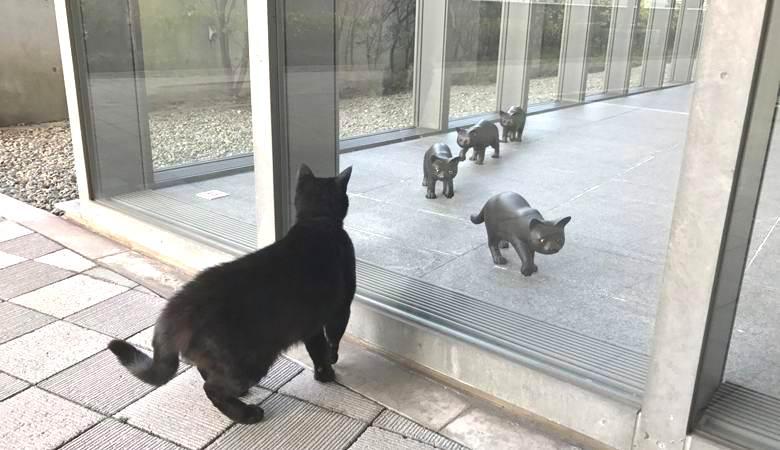 Кошки по непонятной причине …