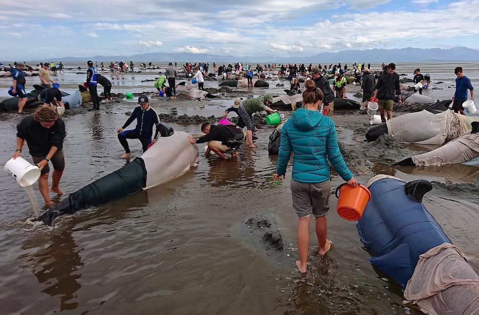 Почему дельфины выбрасываются на берег? Все версии