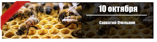 10 октября: Савватий Пчельник.