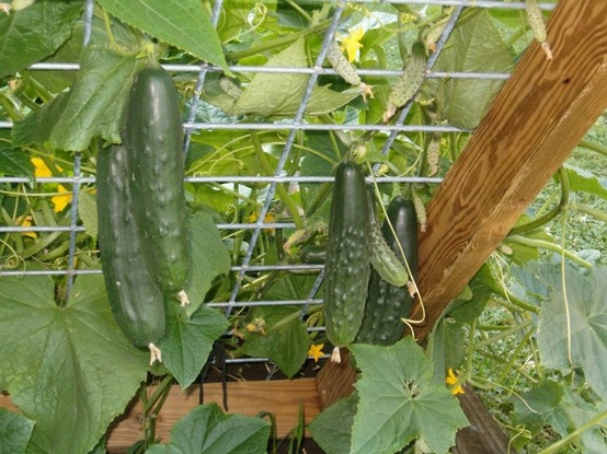 Секретный прием выращивания …