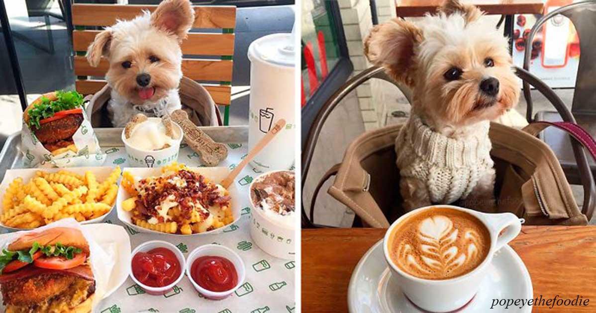 Бездомного пса привели в настоящий ресторан. Только посмотрите на его реакцию!