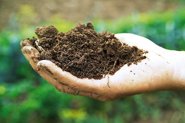 Больше гумуса, меньше химии. Эксперт о том, как создать суперсад почва